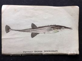 Holloway 1804 Hand Col Fish Print. Fifteen Spined Stickleback